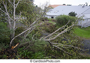 Storm damage - MANGONUI, NZL - JULY 09 2014: Storm damaged ...