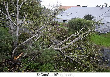 Storm damage - MANGONUI, NZL - JULY 09 2014: Storm damaged ...