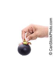 mangostan, samica, dzierżawa ręka