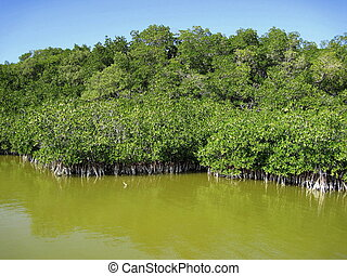 Mangroove jungle in central america wilderness