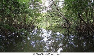 mangrove, arbres