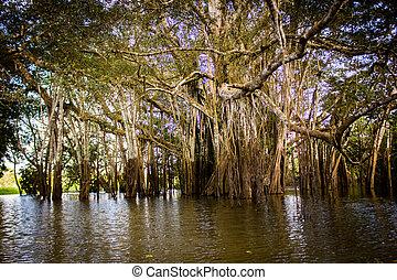 Mangrove at a lagoon near Amazon River