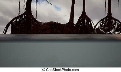 mangrove, au-dessus, arbres, surface, mer
