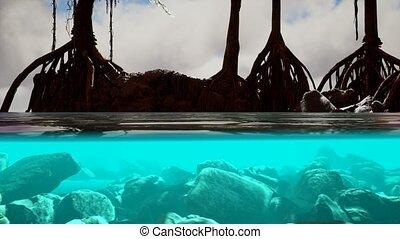 mangrove, au-dessus, mer, arbres, surface, au-dessous