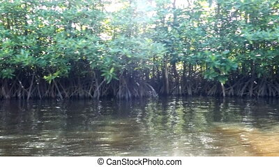 mangrove, forêt, arbres, thaïlande