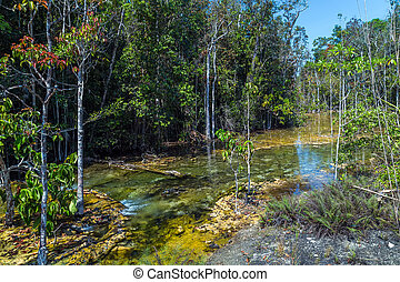 mangrove forest at Krabi in Thailand