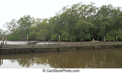 Mangrove forest at the river estuary the conserve sea nature...