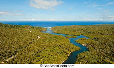 Mangrove forest in Asia. Philippines Siargao island. -...