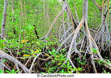 Mangrove forest in Colombia. HDR image