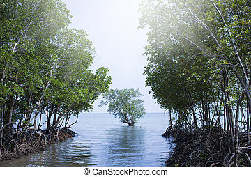 Mangrove forest in Railay, Thailand