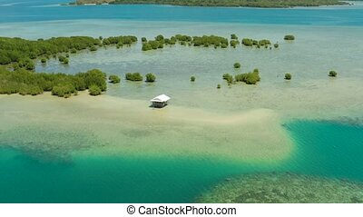 Mangrove forest on a coral reef Philippines, Palawan -...