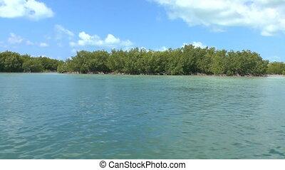 Mangrove forest on shores of Cayo Largo, Cuba