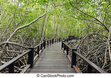 Mangrove forest (Trees include Rhizophoraceae, decandra,...