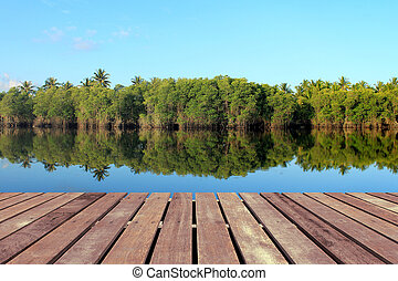 Mangrove forest with wooden floor