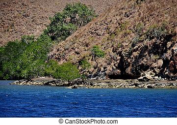 Mangrove in a deep blue sea