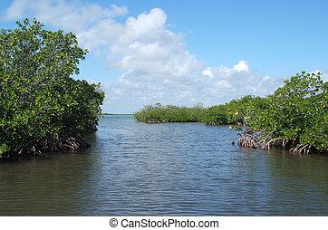 Mangrove in Yucatan peninsula, Mexico