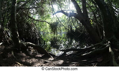 mangrove, jungle