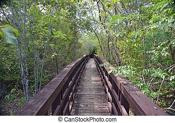 Mangrove swamp boardwalk - Photo of a boardwalk leading...