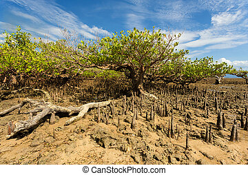 wide shoot of mangrove North Sulawesi, Indonesia with blue sky