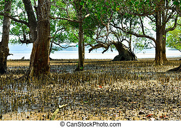 Mangrove trees and roots on the beach