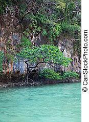Mangrove trees in a lagoon on the island Hong. Thailand