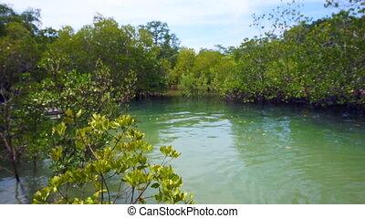 Mangrove trees next to ocean tide