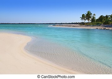 mangrove turquoise river mouth Caribbean sea in mexico