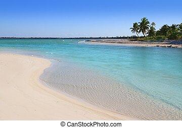 mangrove turquoise river mouth Caribbean sea