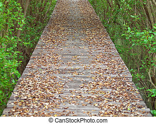 Mangrove Way - Boardwalk through the mangrove forest in Laem...