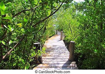 mangrovenbaum, wald, fußweg, dschungel, mexiko