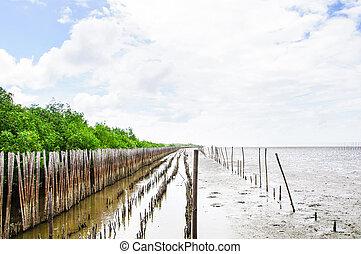 mangrovenbaum, wald