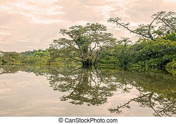 mangroves, árvores, reflexão, ligado, um, lago
