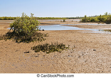 Mangroves and low tide. Madagascar