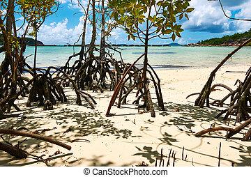 Mangroves at low tide