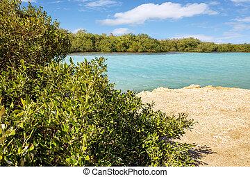 Mangroves in National park Ras Mohammed in Egypt