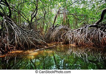 Mangroves in the delta of the tropical river. Sri Lanka