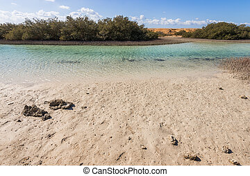 Mangroves in the national park of Ras Mohammed, Sharm el Sheikh, Egypt