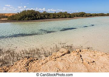 Mangroves in the national park of Ras Mohammed, Sharm el Sheikh