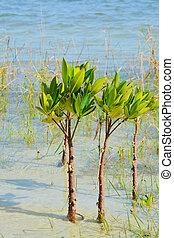 Mangroves on Tampa Bay, Florida