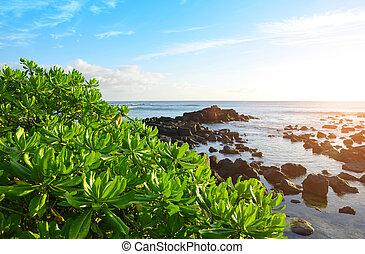 Mangroves on west coastline of Mauritius island at sunset.
