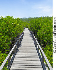 Mangroves rich with long wooden bridge in Thailand