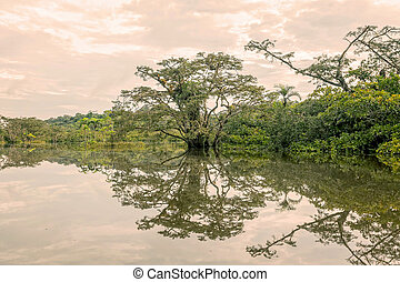 Mangroves Trees Reflection On A Lake