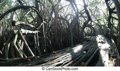 mangrowe, dżungla