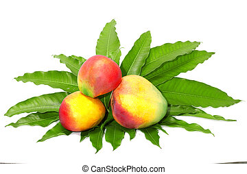 mangue, fruit, feuille