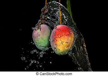 mangue, sur, arbre, à, eau, éclaboussure