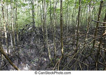mangue, tropical ecosystem