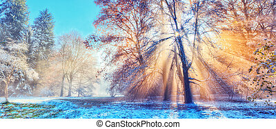 manhã, floresta, sunrays, inverno