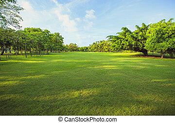 manhã, luz, em, parque público, e, grama verde, jardim, campo, e, planta, uso, como, natural, fundo