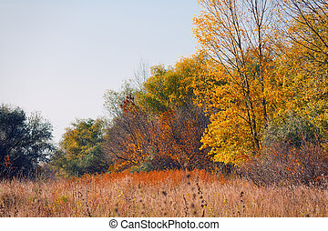 manhã, pacata, paisagem outono, com, floresta, e, prado