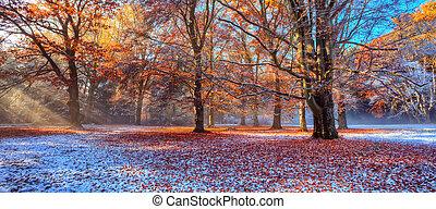 manhã, sunrays, em, inverno, floresta